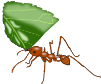 Associations to the word «Ant» - Word Associations Network