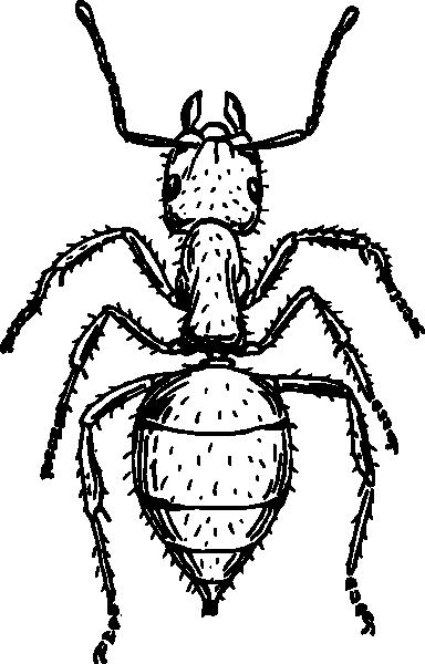 Рисунок насекомого чёрно белый